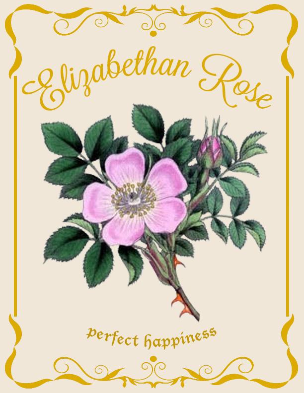 Elizabethan Rose
