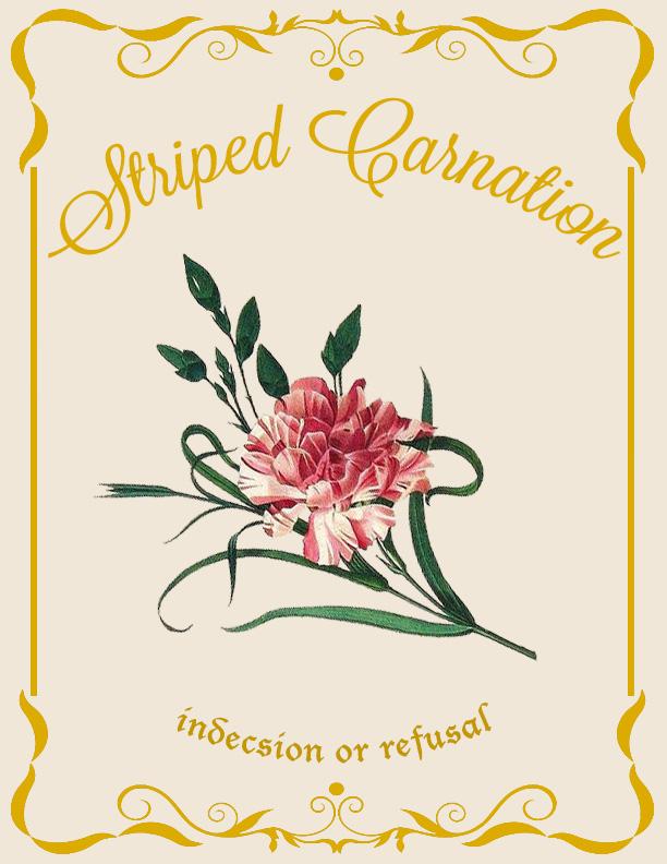 Striped Carnation